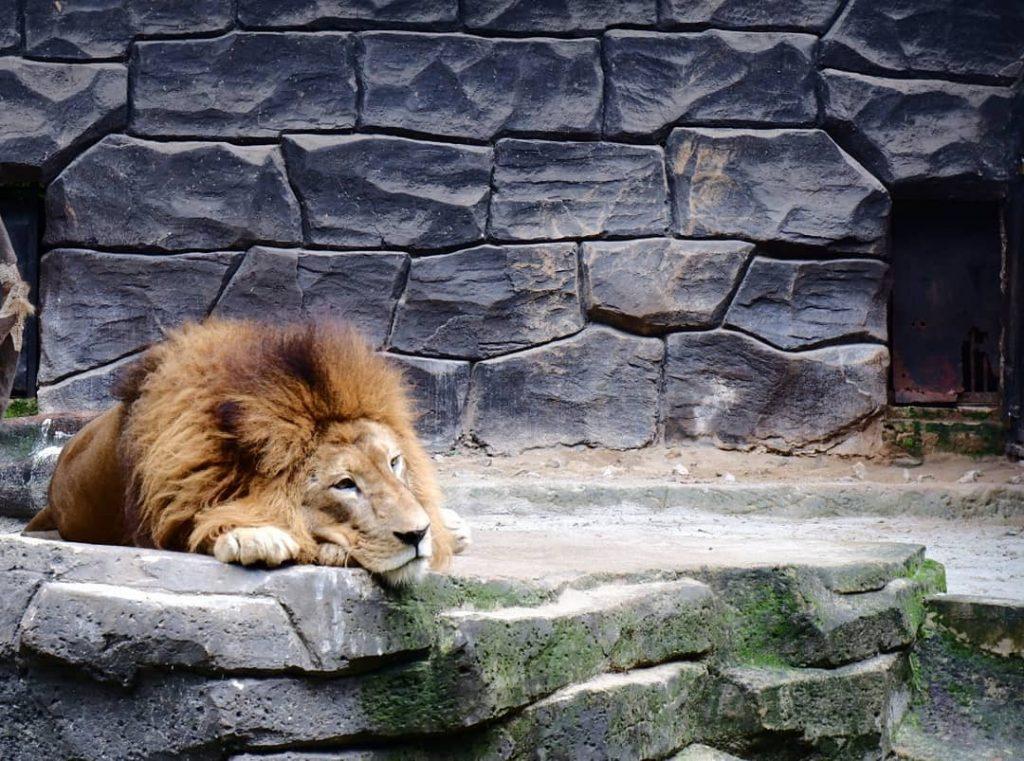 tempat wisata di bandung kebun binatang