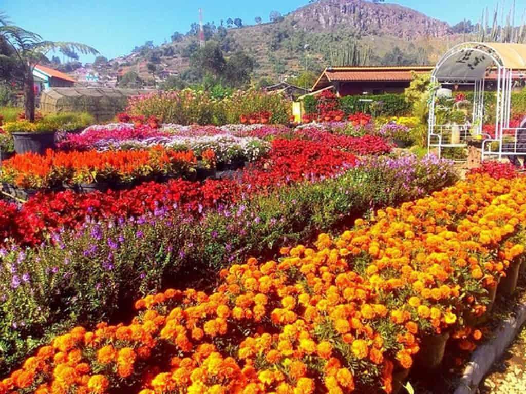 taman bunga cihideung bandung wisata cihideung lembang
