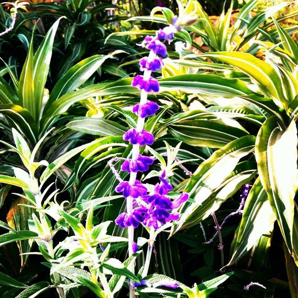 taman bunga cihideung bandung lembang kabupaten bandung
