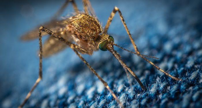 cara mengobati malaria pada anak
